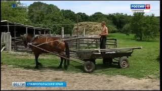 Фермерам Ставрополья выделят свыше 800 млн рублей