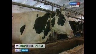 В Адыгее ежегодно увеличивается производство сыра и других молочных продуктов