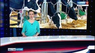 В 15 районах края уже выявлен сговор среди закупщиков молока