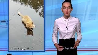 ГлазНародаЕАО: Жара заставила кота принимать прохладительные ванны в луже(РИА Биробиджан)