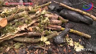 В Дагестане активисты ОНФ выявили незаконную вырубку леса