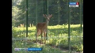 Увидеть диких животных теперь можно в Гузерипле