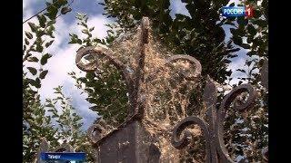Комары в Таганроге: когда ждать завершения нашествия насекомых