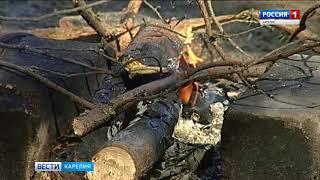 Крупный пожар из-за возгорания штабелей бревен произошел в Карелии