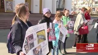 В Саранске зоозащитники провели акцию добра
