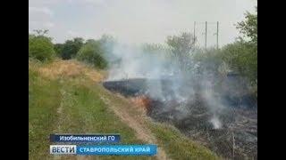 Заброшенный сад горит на Ставрополье