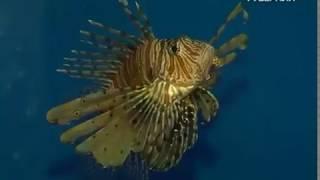 Выставка экзотических рыб открылась в Самаре