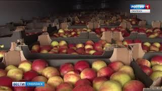 Более 70 тонн подсанкционных фруктов и овощей задержали в Смоленской области