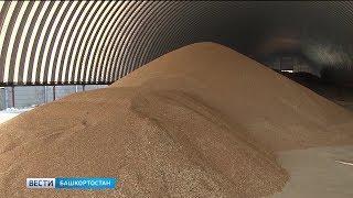 Башкирия в 10 раз увеличила поставки зерна