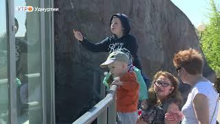 В Зоопарке Удмуртии отпраздновали полугодие медвежонка Пурги
