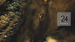 Сбивший лося около Нижнекамска водитель фуры скрылся с места ДТП