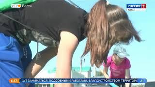 Девять тысяч школьников Алтайского края выйдут на летнюю трудовую практику