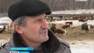 Аграрная династия фермеров Барановых из Братского района расширяет производство