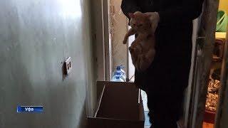 В Уфе суд выселил 11 кошек