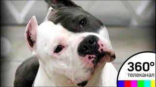 В Балашихе бойцовская собака держит в страхе жителей одного из микрорайонов