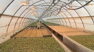 В волгоградских теплицах – первые всходы овощей