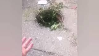 Жителей Кисловодска возмутили опасные люки