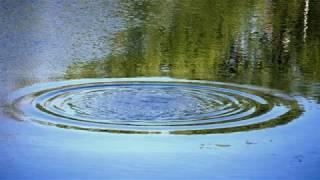 Маленькая девочка утонула в пруду под Белозерском