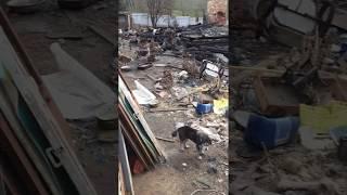 Хаски живут на пепелище под Тверью