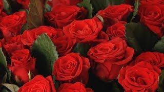 Миллион новых роз  В Кадошкине запустили новый тепличный комплекс