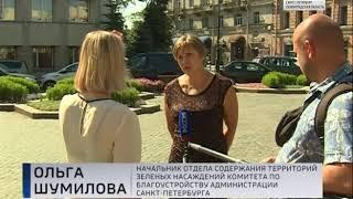 Вести Санкт-Петербург. Выпуск 17:40 от 3.08.2018