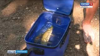 На смоленских водоемах снова разрешен любительский лов рыбы