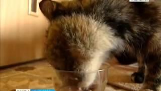 В Красноярске становится все популярнее услуга по аренде животных