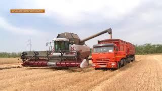 В Апанасенковском районе подводят первые итоги уборки урожая