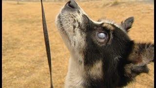Собака Гоша после реабилитации ищет своего хозяина