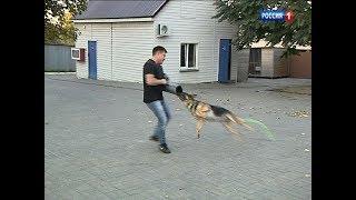 В Ростове собака спасла свою хозяйку от нападавшего с ножом