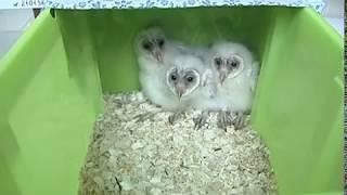 В Ярославском зоопарке посетителям показали маленьких совят