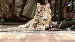 В Новгородской областной филармонии появилась новая звезда – кошка Тошка