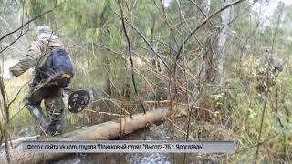 Найдены обломки самолета, потерпевшего крушение во время Великой Отечественной войны