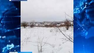На окраине Ачинска застрелили медведя