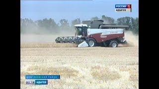 В Шовгеновском районе полным ходом идет уборка озимой пшеницы