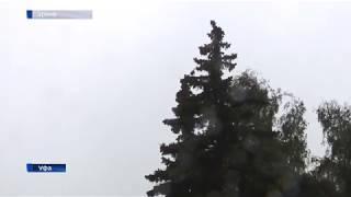 Сильный ветер и туман: спасатели Башкирии предупредили об ухудшении погоды