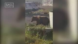 Защитить жителей от медведей требует региональная прокуратура | Новости сегодня
