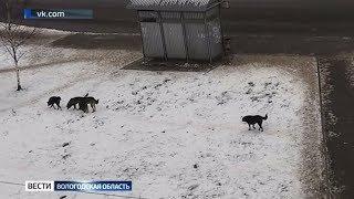 Вологжане сообщают о нападениях бродячих собак