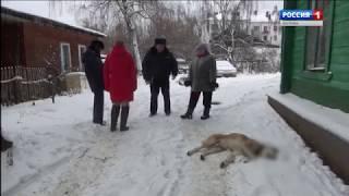 Костромские полицейские обезвредили неожиданно взбесившуюся собаку