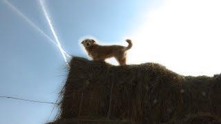 """Все псы попадают в рай, или на кого """"повесили всех собак"""" власти Волгограда"""