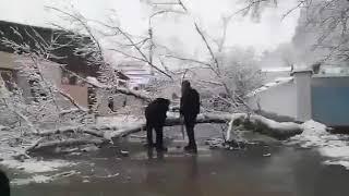 В Кисловодске напротив храма упало дерево