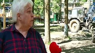 В Брагине вырубают 40-летние деревья: зачем это нужно