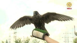 Мусорные свалки — одно из самых привлекательных мест для  птиц.
