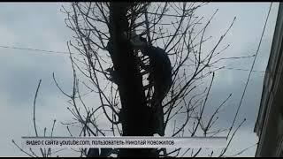 Ярославцы попытались спасти белку, оказавшуюся в центре города