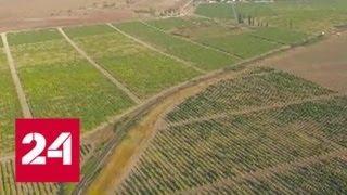 Украина против здавого смысла: Киев плодит фейки о засухе в Крыму - Россия 24