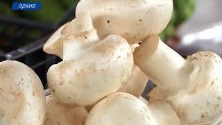 Роспотребнадзор предупредил крымчан о грибной опасности