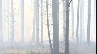 Самый высокий класс пожароопасности объявлен в Переславском районе
