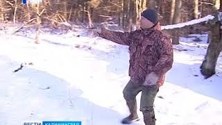 Стартовал учёт численности диких животных в охотничьих угодьях Калининградской области