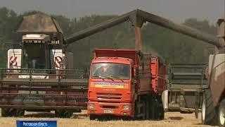 Глава ростовского минсельхоза: донское зерно нужно продавать уже сейчас