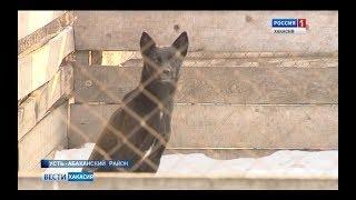 Приюту для бездомных животных в поселке Сахарный требуется помощь. 15.02.2018